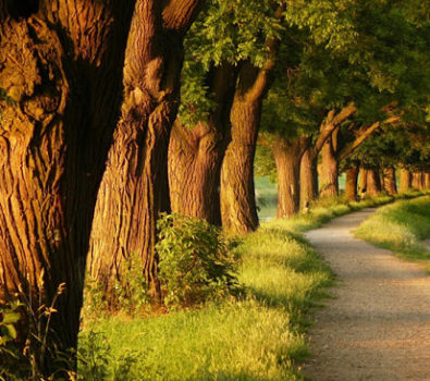 Rüyada Ağaç Görmek