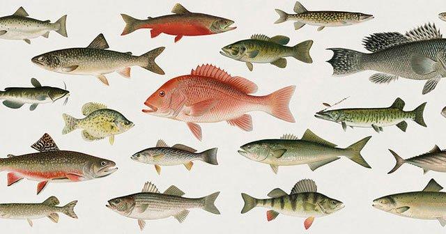 Rüyada Balık Çeşitleri Görmek