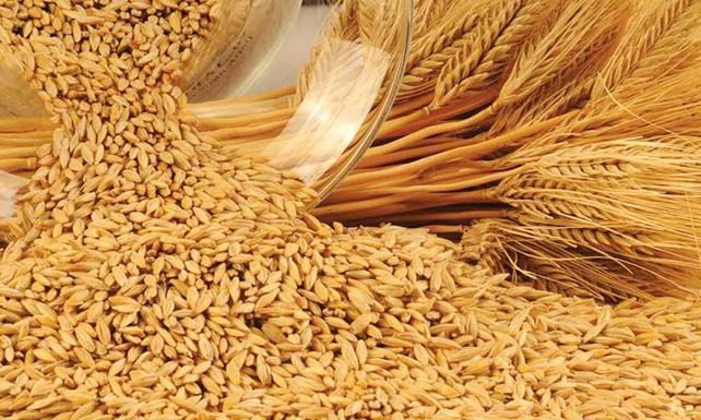 Rüyada Buğday Görmek