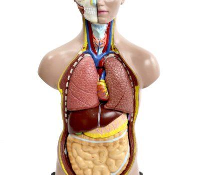 Rüyada İnsan Vücudu Görmek