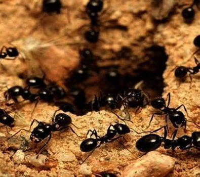 Rüyada Karınca Görmek