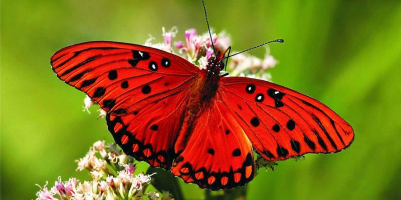 Rüyada Kelebek Görmek