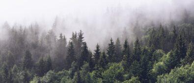 Rüyada Orman Görmek