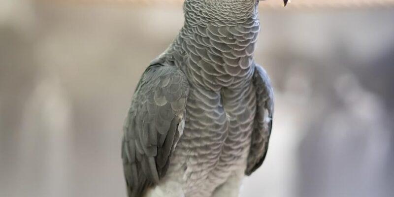 Rüyada Papağan Görmek